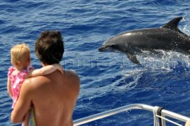 Tour de avistamiento de delfines Gran Canaria
