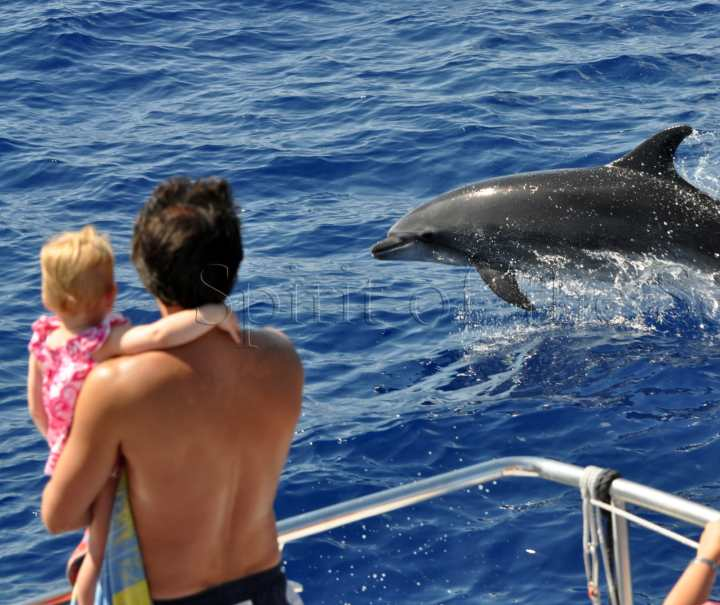 dolphin search trip Gran Canaria