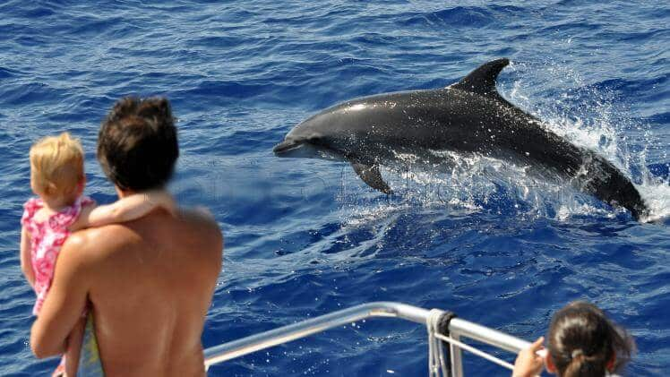Dolphin search gran canaria