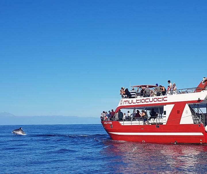 multiacuatic avistamiento de delfienes y ballenas gran canaria